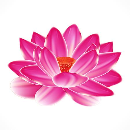 flor de loto: Flor de lirio de agua, elemento aislado en el diseño de spa.