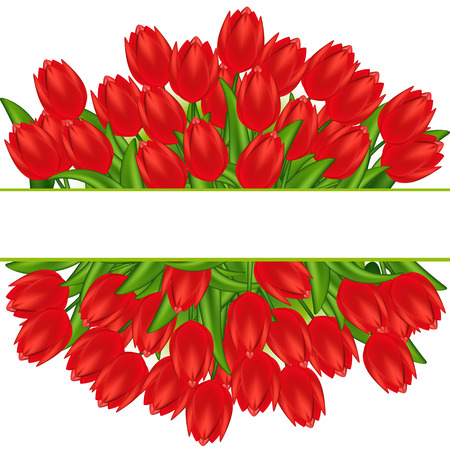 Vector illustration of red tulips. Gradient meshes.  Vector
