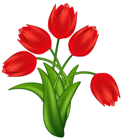 Vector illustration of red tulips. Gradient meshes.
