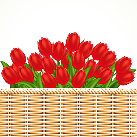 Vector illustration of red tulips. Gradient meshes. Stock Vector - 9045558