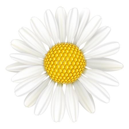 isolated flower: Vector flower chamomile, medicinal plant. Isolated on white background.