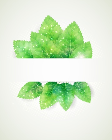 peppermint: Green leaves abstract background. Illustration