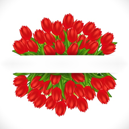 tulips isolated on white background: illustration of red tulips. Gradient meshes.  Illustration