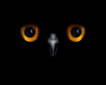Baby owl  Yellow eyes and beak on black background   Vector