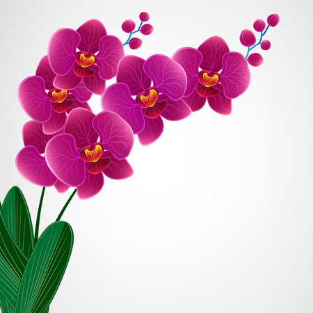 Floral design background  Orchid flowers