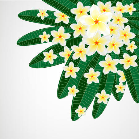 Floral design background. Plumeria flowers. Vector