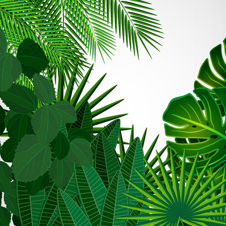fern leaf: Tropical leaves. Floral design background.