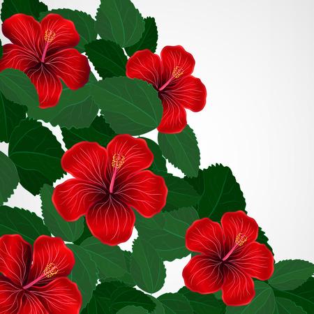 garden party: Floral design background. Hibiscus flowers.