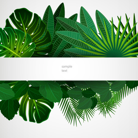 rainforest: Tropical leaves. Floral design background.