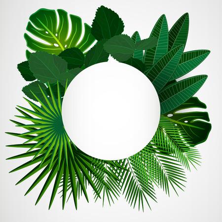 palmier: Feuilles tropicales. Floral design arri�re-plan. Illustration
