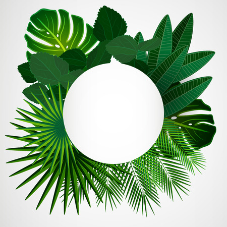 palm leaves: Tropical leaves. Floral design background.