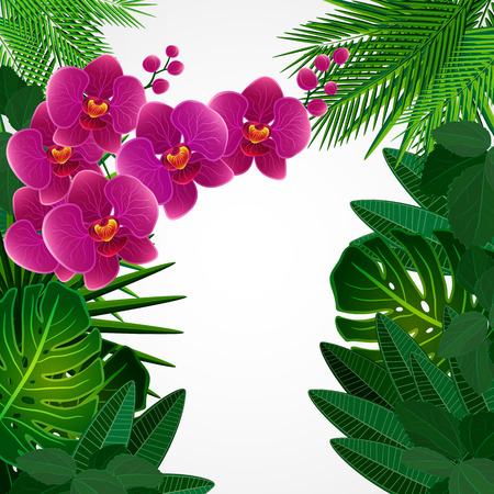 orchid branch: Floral design background. Orchid flowers. Illustration