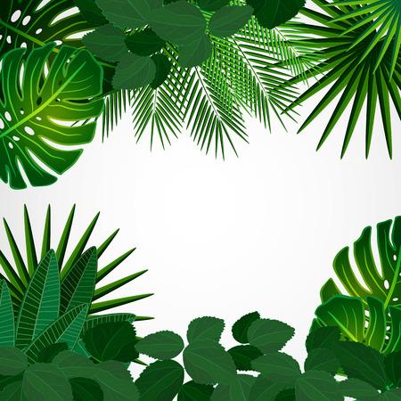 feuillage: Feuilles tropicales. Floral design arrière-plan. Illustration