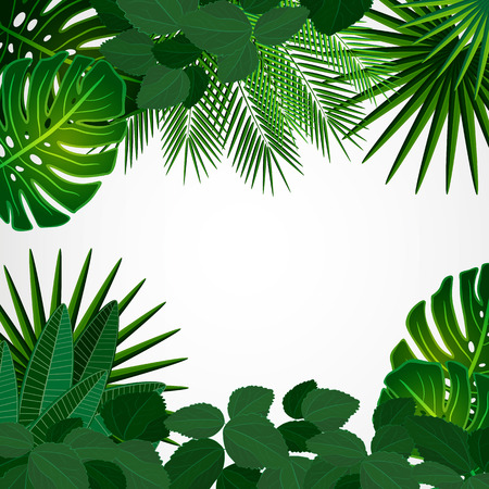 lush foliage: Tropical leaves. Floral design background.