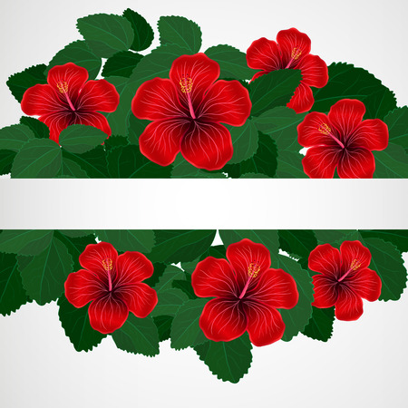 flowers on white: Floral design background. Hibiscus flowers.