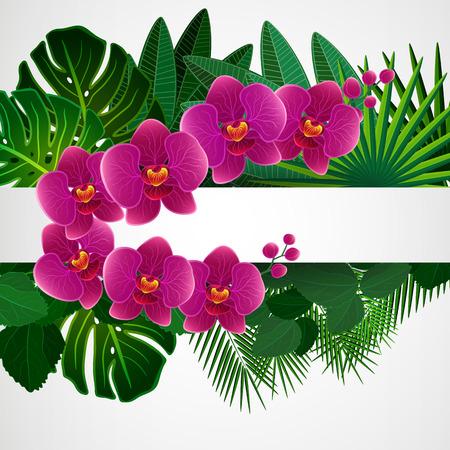orchid: Floral design background. Orchid flowers. Illustration