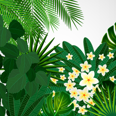 natural beauty: Eps10 Floral design background. Plumeria flowers and tropical leaves.