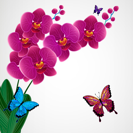 white orchids: Floral design background.  Illustration
