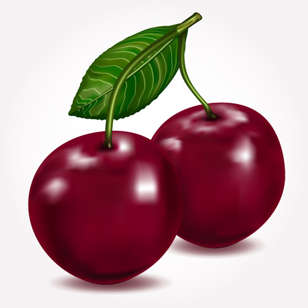 sour cherry: Bright berries ripe cherry with leaves isolated on white. Vector illustration.