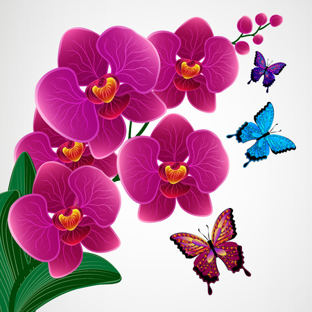 Floral design background. Orchid flowers with butterflies. Illustration