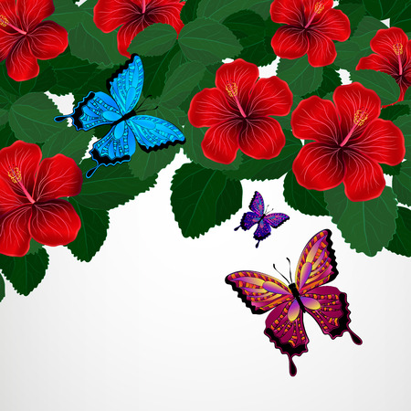 vacaton: Floral design background. Hibiscus flowers with butterflies.