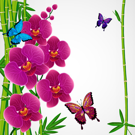 bamboo border: Floral design background. Bamboo and orchids with butterflies. Stock Photo