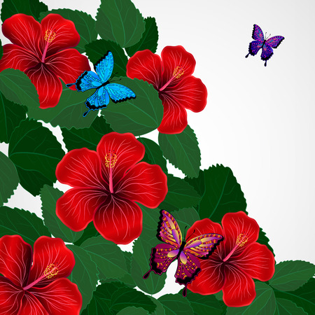 Floral design background. Hibiscus flowers with butterflies.