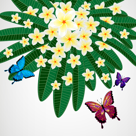 pink plumeria: Eps10 Floral design background. Plumeria flowers with butterflies. Illustration