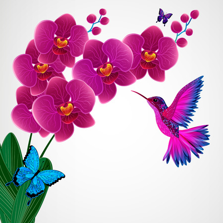 orchid: Floral design background. Orchid flowers with bird, butterflies.