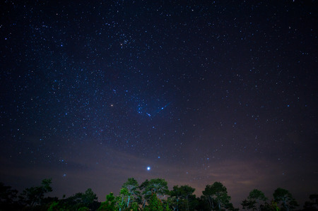 orion: Star night over Pine forest