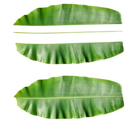 Fresh Banana leaf and component of banana leaf.