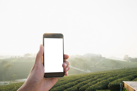 Close up of a man using smartphone with blank screen mobile in sunny and tea field background, Chiangmai, Thailand.