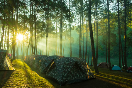 Camping and tent under the pine forest in sunrise at Pang-ung, pine forest park , Mae Hong Son, North of Thailand, Travel and family concept.