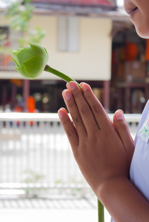 buddism: hands of child with one lotus, pray for buddha
