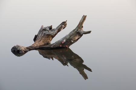 miror: stump in the water it is reflex water Stock Photo