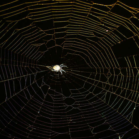 A spider is waiting for a victim in the web on the eve of the Halloween holiday. Close up. Standard-Bild