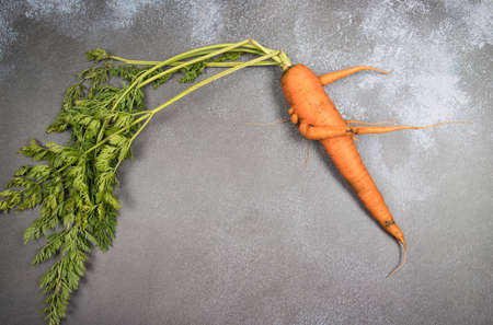 Deformed ugly carrot root crop with a bizarre shape with various appendages on a dark background. A place for a copy of space. Horizontal orientation 免版税图像