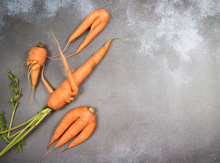 A few ugly, oddly shaped carrot roots lie against a gray background. A place for a copy of space. Horizontal orientation
