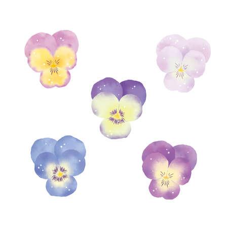 Flower material collection Various pansies set Reklamní fotografie