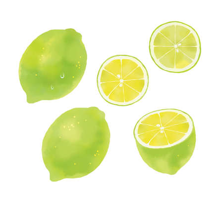 Fruit illustration of watercolor touch, illustration of green lemon