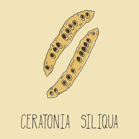 decaffeinated: Carob pods. Ceratonia siliqua. Vegetarian decaffeinated food. Vector illustration Illustration