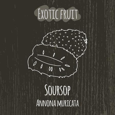 annona: Hand drawing illustration of soursop. Fresh fruit sketch background. Vector illustration for your design. Annona muricata