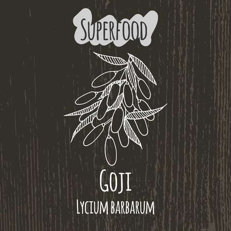 Hand drawing illustration of goji berries. Fresh fruit sketch background. Vector illustration for your design. Lycium barbarum