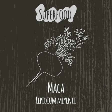 maca: Hand drawing illustration of camu maca. Fresh fruit sketch background. Vector illustration for your design. Lepidium meyenii.