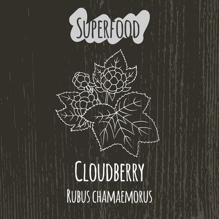 chicouté: dessin à la main illustration de la chicouté. Frais fond d'esquisse de fruits. Vector illustration pour votre conception. chamaemorus Rubus.
