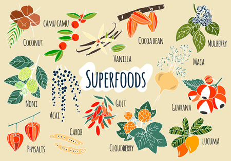 Vector hand drawn superfoods. Fresh fruits sketch background. Vector illustration for your design.