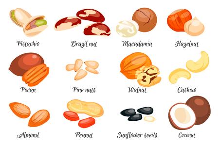 Nuts set - Hazelnoot Amandel Pistache Pecan Cashew Brazilië moer Walnut Peanut Coconut Macadamia zonnebloempitten en pijnboompitten. Vector Illustratie