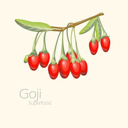 lycium: Illustration of goji berries. Fresh fruit background. Vector illustration for your design. Lycium barbarum
