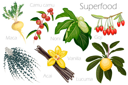 acai: Vector illustration of a super food. Illustration of fresh exotic fruits and berries for your design.