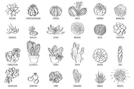 Hand drawn cactus set. Vector illustration of a cactus isolated on a white background.
